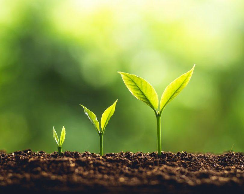 |Lead Nurturing|lead nurturing
